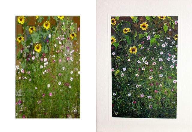 Sun flowers and wall flowers