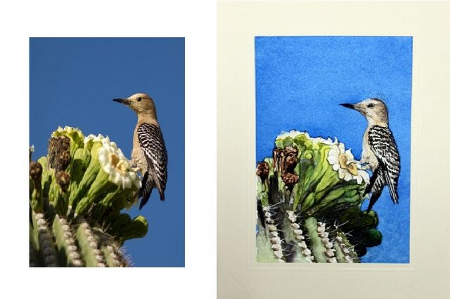 Woodpecker on a cactus