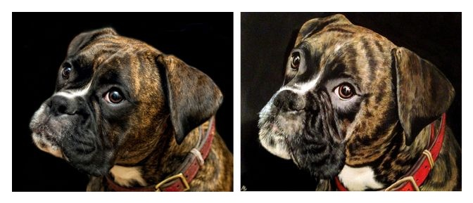 Ellie the boxer dog in watercolour
