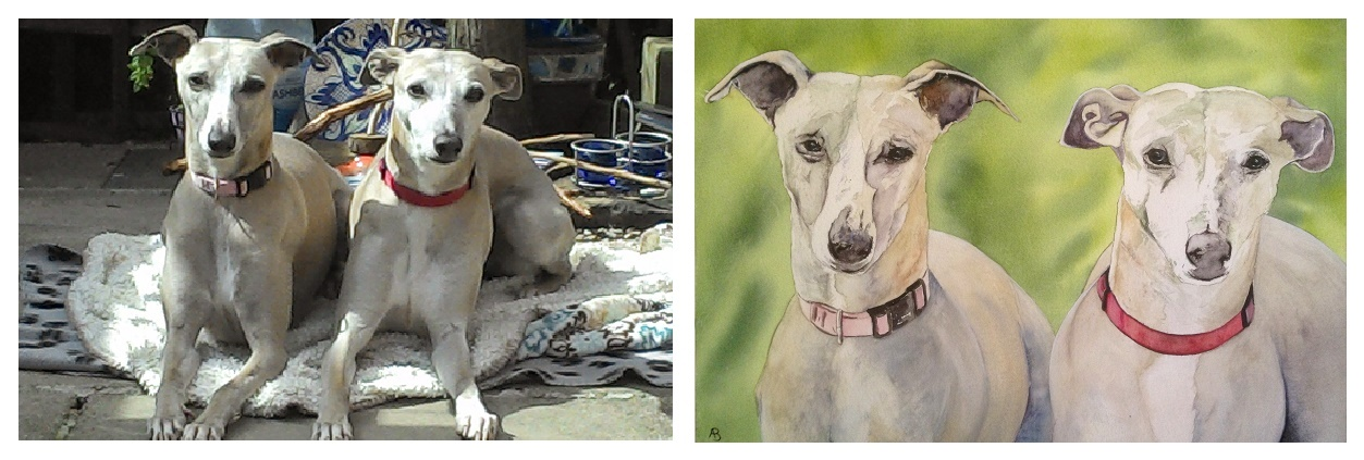 Greyhound dogs named \poppy and Rosie painted in watercolour