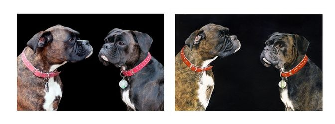 watercolour portrait of Ellie and Sophie boxer dogs