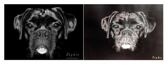 painting of Sophie the boxer dog