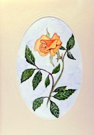 A single peach wild rose
