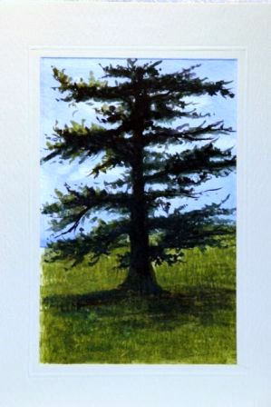 Fir tree  Water Color greetings
