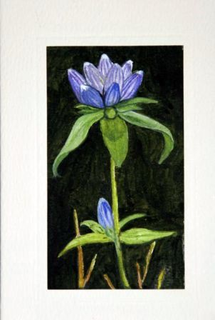 Finely painted flower greeting cards