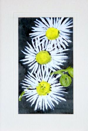 Trio of daisies Water Color greetings cards
